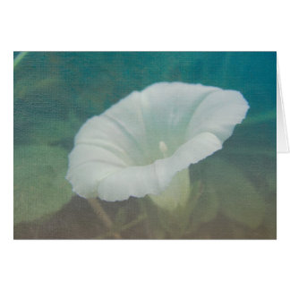 White Bindweed - The Wild Perennial Morning Glory Card