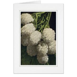 White Blackberry Card