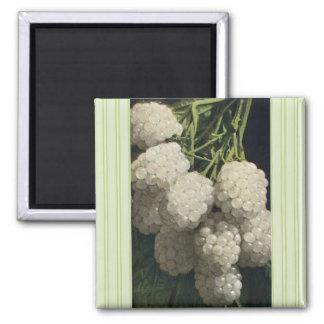 White Blackberry Square Magnet