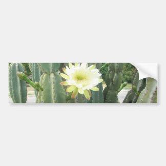 White Bloom On Cactus Bumper Sticker