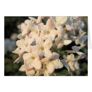White Blooms Note Card