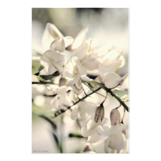 White Blooms on a Bright Day Photo Print