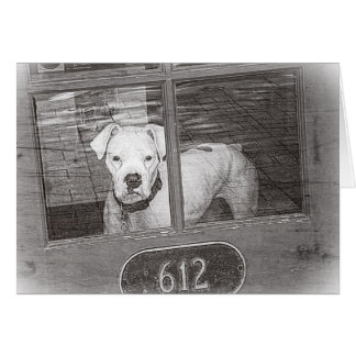 White Boxer Dog Behind Door, Black and White Card