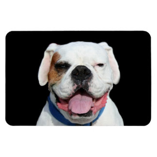White Boxer Dog Rectangular Photo Magnet