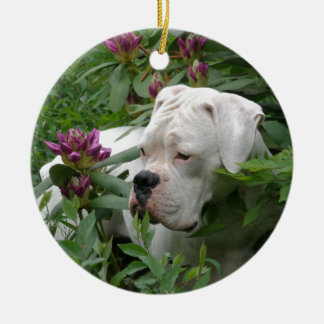 White Boxer in Pink Rhodies Ceramic Ornament