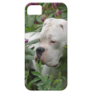 White Boxer in Pink Rhodies iPhone 5 Cases