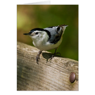White-Breasted Nuthatch Card