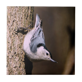 White-Breasted Nuthatch Ceramic Photo Tile