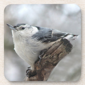 White-breasted Nuthatch Drink Coasters