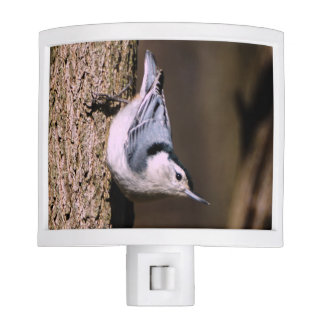 White Breasted Nuthatch Night Light