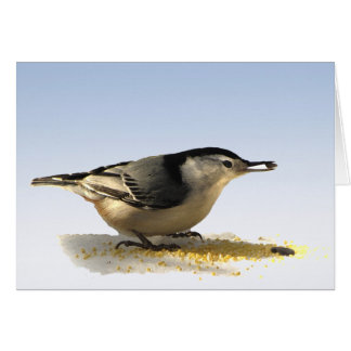 White-breasted Nuthatch Thank You Card