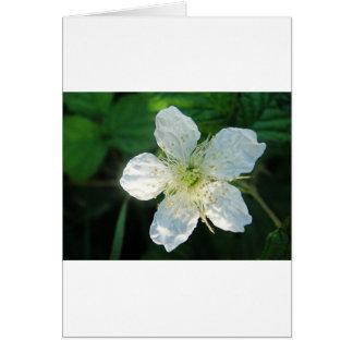 White Brombeerblüte Card