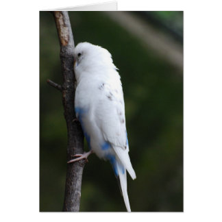 white budgie hugging tree card