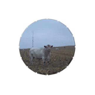 White Bull in a newly harvested Iowa Corn Field
