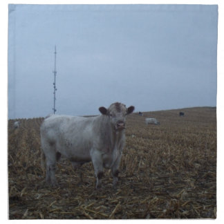 White Bull in a newly harvested Iowa Corn Field Printed Napkins