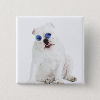White bulldog with blue tinted shades 2 inch square button