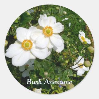 White Bush Anemone flowers Round Sticker