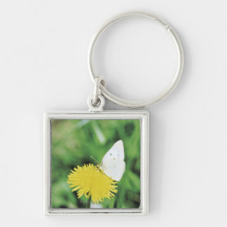 White butterfly feeding on a dandelion keychain