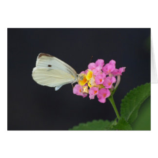 White Butterfly on Lantana - card