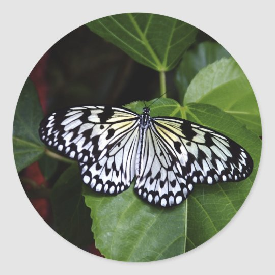 White Butterfly Stickers