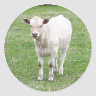 White Calf Stickers