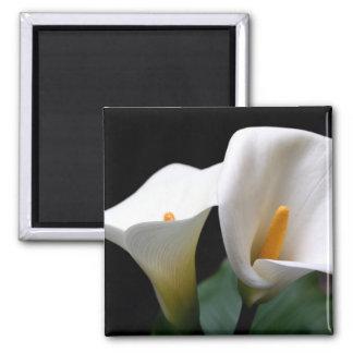 White Calla Lily Flower Square Magnet