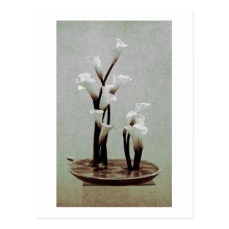 White Calla Lily Ikebana Postcard