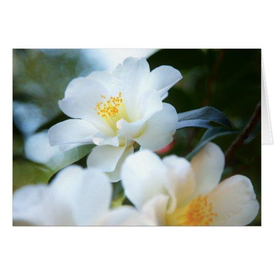 White Camellias Cards