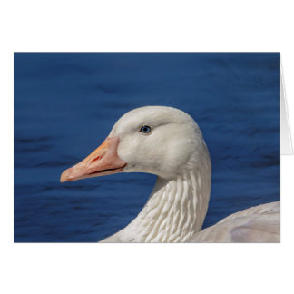White Canadian Goose Card
