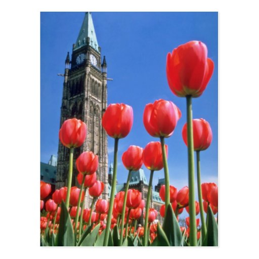 White Canadian Tulip Festival, Peace Tower with tu Post Card