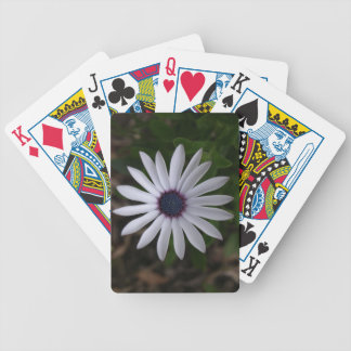 WHITE CAPE DAISY FLOWER BICYCLE PLAYING CARDS