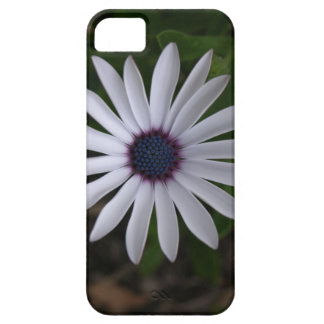 WHITE CAPE DAISY FLOWER iPhone 5 COVER