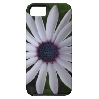 WHITE CAPE DAISY FLOWER iPhone 5 COVERS