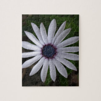 WHITE CAPE DAISY FLOWER JIGSAW PUZZLE
