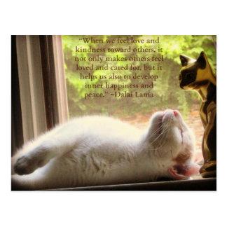 White Cat & Dalai Lama Kindness Quote Postcard