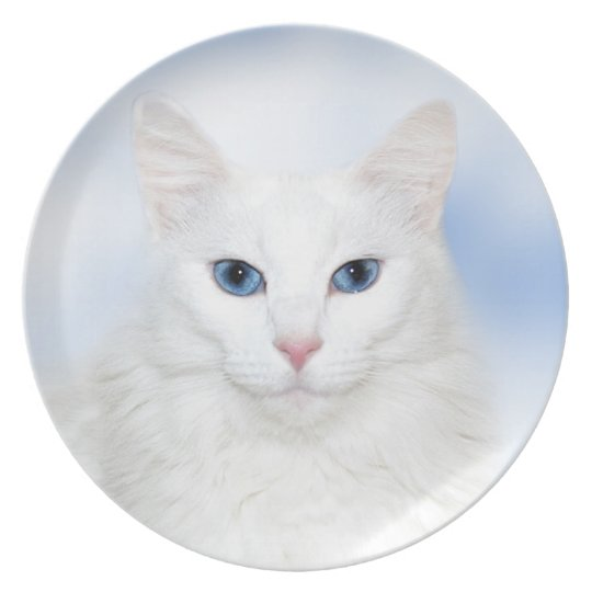 White cat face plate