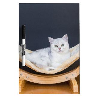 White cat lying lazy in hammock Dry-Erase board
