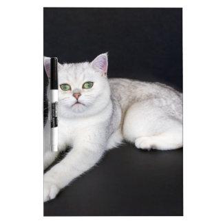 White cat lying on isolated black background Dry-Erase whiteboards
