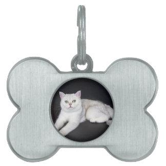 White cat lying on isolated black background pet name tag