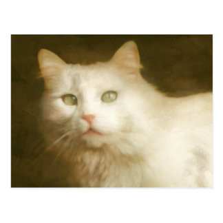 White cat painting postcard