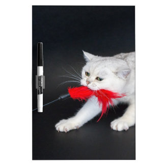 White cat playing pulling red toy Dry-Erase whiteboards