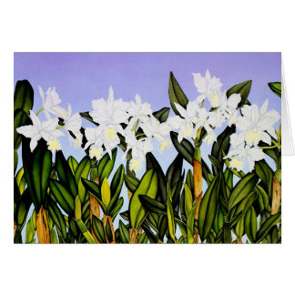 White Cattleya Orchids Card