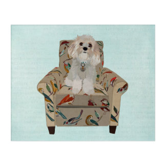 WHITE CAVACHON IN BIRD CHAIR ACRYLIC WALL ART
