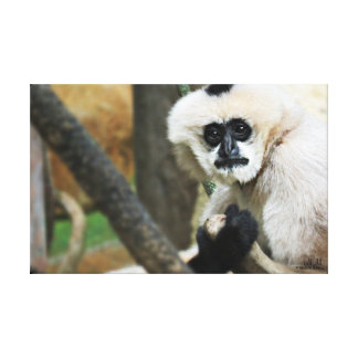White-Cheeked Gibbon Stretched Canvas Print
