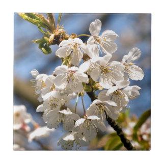 White Cherry bare OM Tile