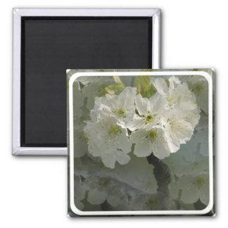 White Cherry Blossoms Magnet Fridge Magnet