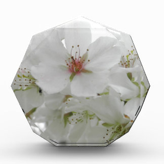 White Cherry Blossoms Sakura Flowers Floral Photo