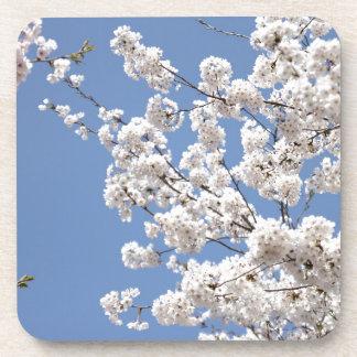 White cherry flowers coaster