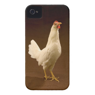 White Chicken Rooster Hen iPhone 4 Case-Mate Case