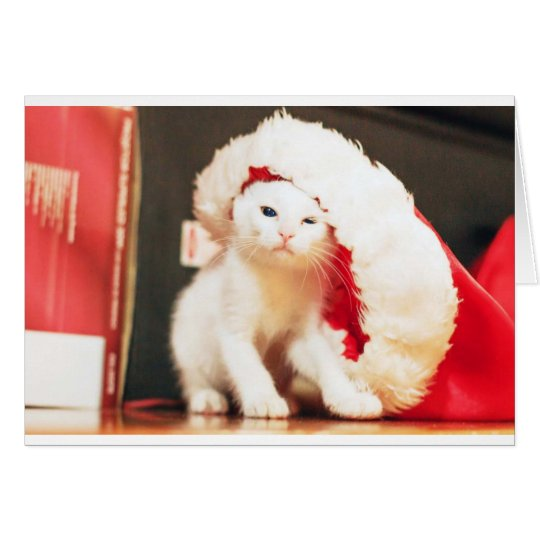 White Christmas Cat Card